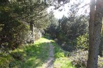 Forêt de pins noirs et de rhododendrons sur le chemin de l´Obac.