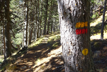 Nous suivons les balises en parcourant une forêt dense de pins noirs.