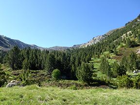 Chemin de Prat Primer et for�t de la Ca�lla