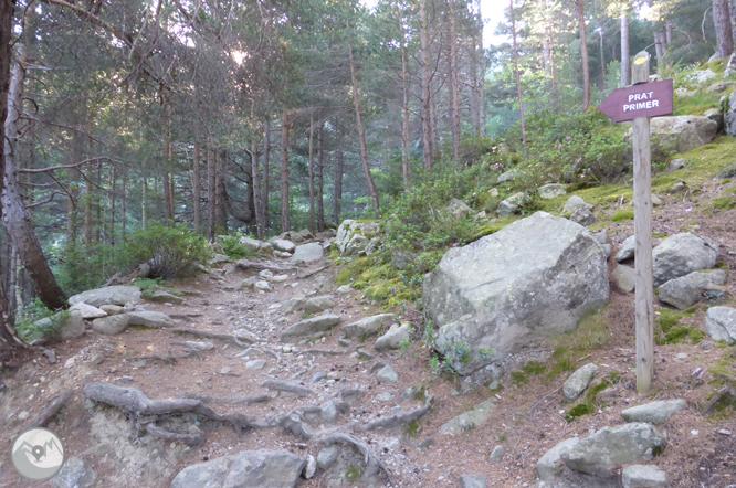 Chemin de Prat Primer et forêt de la Caülla 1