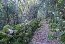 Chemin délimité par des murs de pierre sèche.