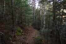 Forêt de Ròdol.