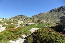 Rhododendrons vers les lacs d´Ensagents.