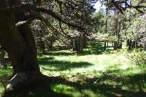 La forêt de Campeà, où le chemin se perd.