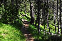 Chemin dans la forêt.