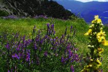 Champs colorés en jaune et en lilas.