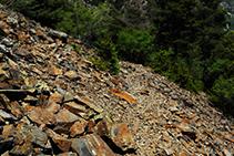 Terrain rocailleux en ardoise rougeâtre.