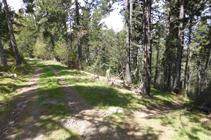 Chemin du versant ombragé de La Gonarda.