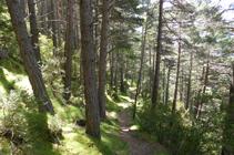 Forêt du versant ombragé de La Gonarda.