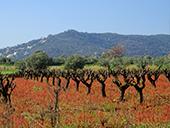 Puig Cargol et la plaine de Calonge