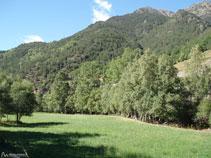 Des prés verdoyants avec des arbres près de la rivière.