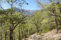 Forêt de chênes.